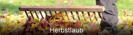 Themenwelt Herbstlaub