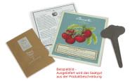 3 Stück Esschert Design Saatpaket Minze, Saatgut, Minze-Samen, Anzucht von Minze