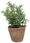6 Stück Esschert Design Kunststoffpflanze Thymian im Topf, Größe S, ca. 8,6 cm x 8,6 cm x 15 cm