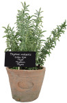 6 Stück Esschert Design Kunststoffpflanze Thymian im Topf, Größe L, ca. 11 cm x 11 cm x 19 cm