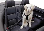 Autosicherheitsgurt für Hunde und Katzen, Größe S, schwarz, Größenverstellbar