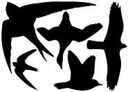 Esschert Design Fenstersticker, Vogelaufkleber, 1 Bogen mit 5 Aufklebern in schwarz