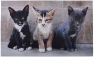 Esschert Design Schmutzfangmatte, Fußmatte mit Motiv Kätzchen, ca. 76 cm x 45 cm