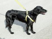 Flash & Reflex Hunde Geschirr gelb