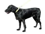Flash & Reflex Hunde Halsband gelb