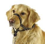 Hunde Trainingshilfe, MAXI COACH, schwarz