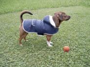 Hundemantel TEDDY, 27 cm Bauchumfang, 32 bis 43 cm