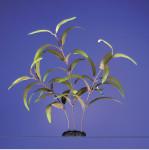 Karlie Aquarium Pflanze Ammannia Höhe 25 cm