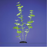 Karlie Aquarium Pflanze Hydrocotyle