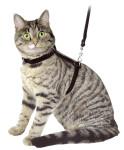 Katzengeschirr mit Leine, 120 cm, schwarz, aus Velours