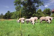 Kerbl Easy Net 105 cm für Schafe