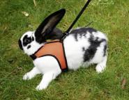 Kerbl Kaninchen-Geschirr SPORT, mit flexibler Leine 120 cm