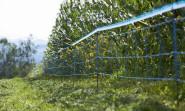 Kerbl Wildschwein Abwehrnetz 50 Meter