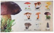 Rivanto® Türmatte Pilzsammlung aus Polyester/Kunststoff, 75 x 45,4 x 0,3 cm, Aufdruck von 9 verschied. Pilzarten, , Türvorleger, Fußabstreifer