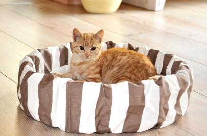 Silvio Design Katzen-Bett, Katzenkissen, Katzen...